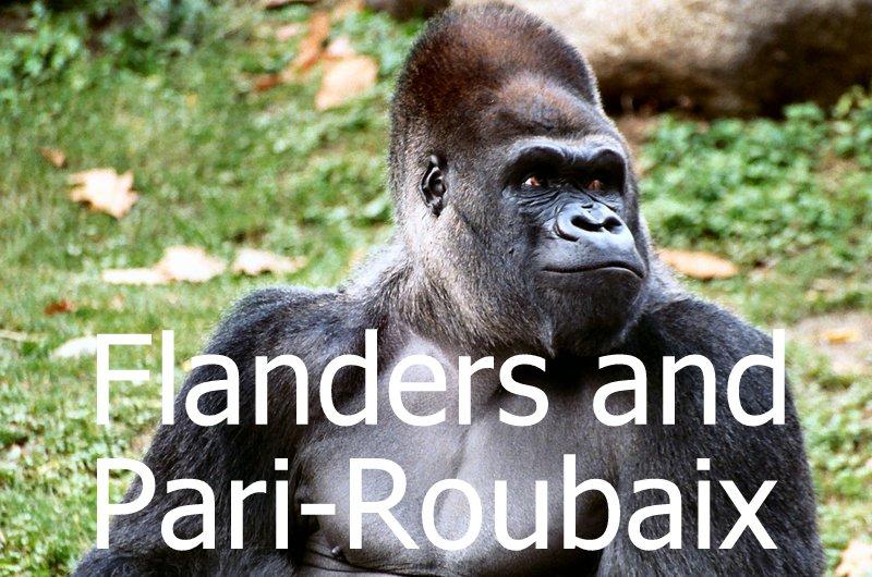 2017年のゴリラはフランドルとパリ~ルーベを狙う。