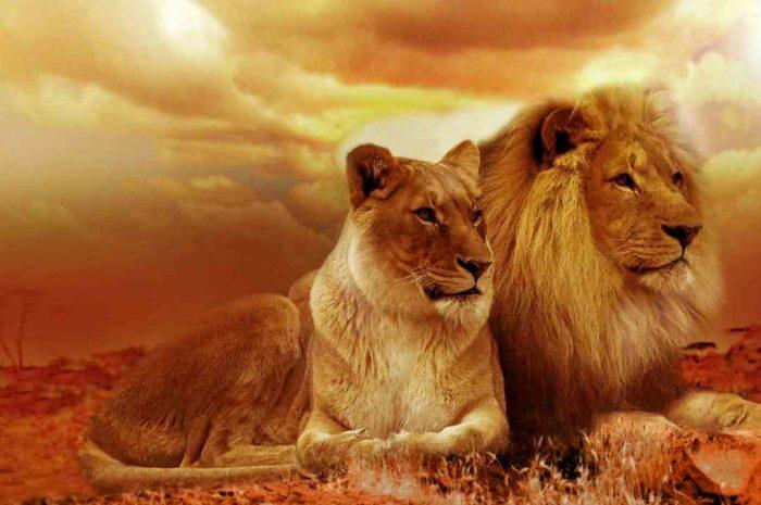 SRAMがスヴェン・ネイスのTelenet Baloise Lionsと契約し、コンポ提供へ
