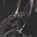 ロードバイクディスクブレーキ